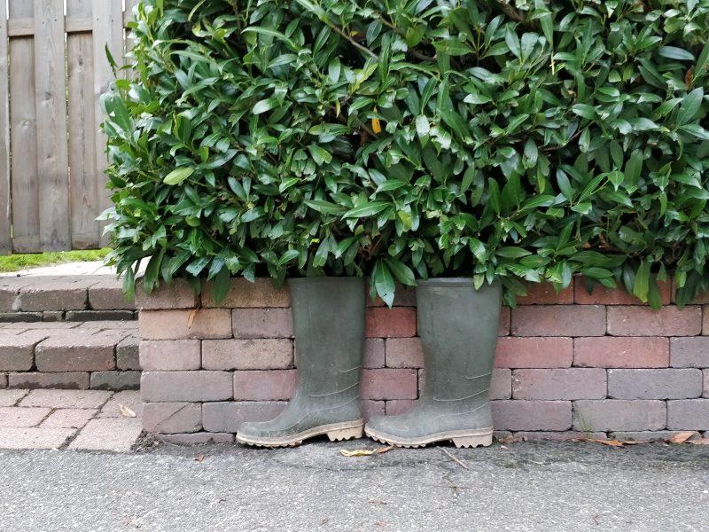 Et par gummistøvler står under en hæk.